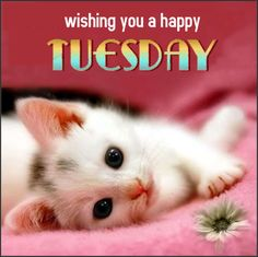 Image result for wishing you a happy Tuesday and rest of the week