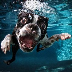Hilarious Underwater Photos of Dogs