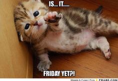 Is it Friday yet?!