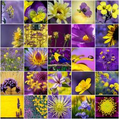 Glorious Flickr Favorites ! by LHDumes, via Flickr ... purples & yellow