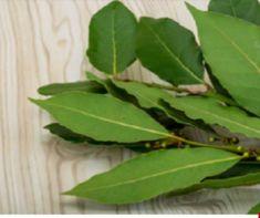 Santé Archives - Aimer Tant Que Possible Home Remedies, Natural Remedies, Aloa Vera, Diabetes, Juice Smoothie, Medicinal Plants, Healthy Tips, Good To Know, Natural Health
