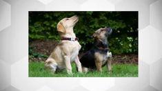 Comment apprendre a un chien a donner la patte