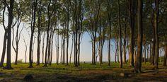 Gespensterwald Nienhagen   von Dirschl