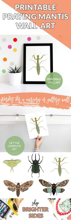 This printable praying mantis art print is a show-stopping, modern addition to your home decor or classroom. Created with a digital watercolor technique, this little one is inspired by pinned insect specimens, but without the ick-factor, and of course it's cruelty-free! Printable Classroom Decor, Art Print, Praying Mantis, Nursery Decor, Wall Decor,Wall Art, Home Decor, Kids Room Decor, Nature, Boho, Gift for Him