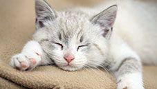 Gatito blanco soñoliento