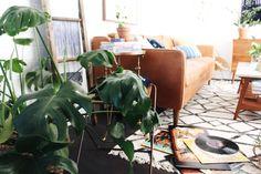 Novas Darlings - plantas de interior