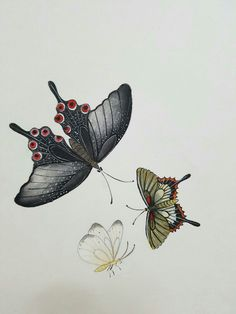 Butterfly Drawing, Butterfly Watercolor, Korean Painting, Chinese Painting, Ink Painting, Fabric Painting, Old Paintings, Original Paintings, Painters Studio