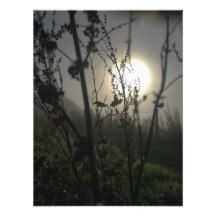 A photograph of a Welsh autumn sunrise with fog, dew, cobwebs, dock and other wild plants. Taken in Newtown, Powys. Original image is 2367 x 3087px.