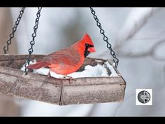 Identify Birds at feeders Identify Birds, Constance, North America, Wildlife, Canada, Animals, Feed Trough, Animales, Animaux