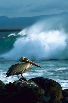 ♂ life by the sea. ocean wave rock bird