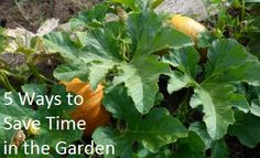 Five tips to save you time and keep your garden beautiful all summer long.