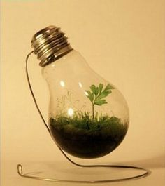 why not use a light bulb to grow little mosses and plants.! soo neat