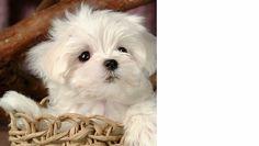 10 SUPER CUTE - Dogs in Wicker Furniture Pictures!