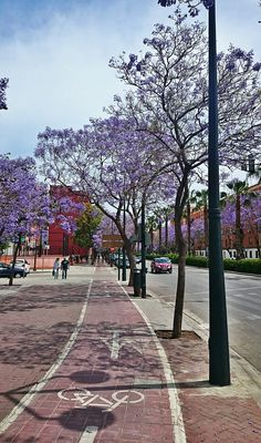 Jacaranda in bloom along one of our many bike lanes in the city.