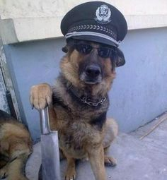 I have applied at k-9 school and I hope to hear from them soon! Image detail for -Police Dog - Jokeroo