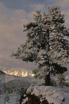 ~A Winter's Tale~