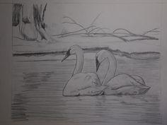Canadian Wildlife Artist featuring original works of art and prints Original Artwork, Original Paintings, Trumpeter Swan, Canadian Wildlife, Wildlife Art, Swans, Art For Sale, Birds, Artist