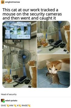 20 Best Funny & Cute Animal Photos for Today. Serving only the best funny photos in 2019 that will help you laugh today. Memes Estúpidos, Cat Memes, Funny Memes, Cute Funny Animals, Funny Cute, Cute Cats, Cute Animal Photos, Funny Animal Pictures, Animal Memes