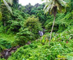 The rainforests of Vanua Levu, Fiji.