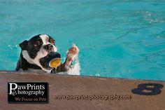 Paw Prints Photography