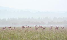Oh deer, oh deer, oh deer. Fallow Deer, Oh Deer, Seventeen, Mists, My Photos, Photograph, Explore, Landscape, Fotografie