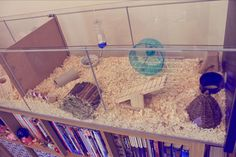 misadventures of alice: Ikea Detolf Hamster Cage Hamster Bin Cage, Gerbil Cages, Hamster House, Ikea Detolf, Russian Dwarf Hamster, Hamsters Video, Pet Rodents, Dwarf Rabbit, Pet Cage