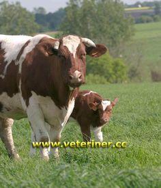 dating sites voor boeren en ranchers