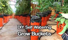 DIY Self Watering Alaska Grow Buckets  This simple DIY self watering Alaska grow bucket project could propel you garden into a super growing garden in no time! Find free buckets on Craigslist or your local classifieds like freecycle.com to make this project very frugal. The Alaska Grow Bucket is th…