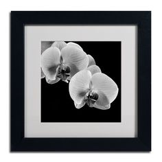 Orchids by Michael Harrison Matted Framed Photographic Print