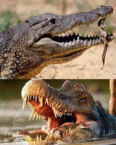 "Bobbie Knight on Instagram: ""Reposted from @mrg_jurassic 🐊 .. .. crocodiles & spinosaurus .. .. .. #dino #dinosaur #dinosaurs #trex #paleontology #paleoart…"" Spinosaurus, Crocodiles, Jurassic Park, Knight, Elephant, Animals, Instagram, Animales, Crocodile"