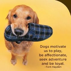 Dogs motivate us
