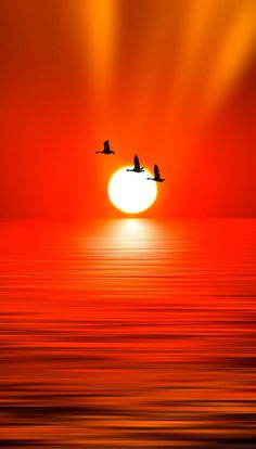 ☼ Flying in the red sunset Beautiful Nature Wallpaper, Beautiful Moon, Beautiful Sunrise, Beautiful Landscapes, Sunset Pictures, Nature Pictures, Beautiful Pictures, Amazing Sunsets, Amazing Nature