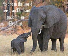 """<3  """"Ninguém no mundo precisa de uma presa do elefante, mas de um elefante..."""""""