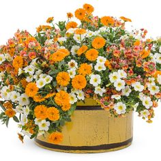 Proven Winners - Sunsatia® Blood Orange™ - Nemesia hybrid orange rich shades of orange, red and yellow plant details, information and resources. Container Flowers, Container Plants, Container Gardening, Orange Flowers, Colorful Flowers, Amazing Flowers, Share Pictures, Yellow Plants, Fall Containers