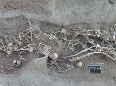 Skeletons in a mass grave from 1720–1721 in Martigues, France, yielded molecular evidence of the orientalis strain of Yersinia pestis, the organism responsible for bubonic plague. The second pandemic of bubonic plague was active in Europe from AD 1347, the beginning of the Black Death, until 1750.