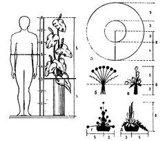 Пропорции (3, 5 и 8 частей) по «золотому сечению»: а — для венков; б, в — для букетов; г — для композиций в плоских вазах; о — для горшечных цветов в плошках