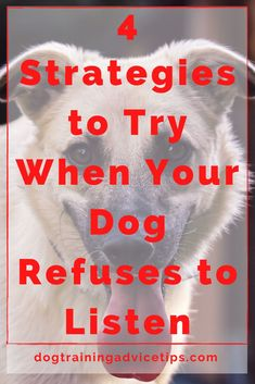 Dog Hand Signals, German Dog Breeds, Basic Dog Training, Pet Tips, Pet Treats, Yorkies, Dog Behavior, Dog Quotes, Shiba Inu