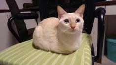 Rylee Cat | Pawshake