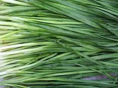 Green Tip: Chives will make your carrots grow sweeter!