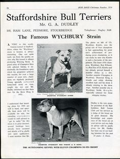 STAFFORDSHIRE BULL TERRIER OUR DOGS OLD 1954 DOG BREED KENNEL