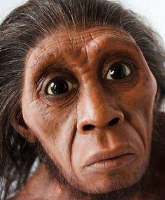homo floresiensis | lifelike figures » figures