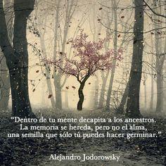 """... """"Dentro de tu mente decapita a tus ancestros. La memoria se hereda, pero no el alma, una semilla que sólo tú puedes hacer germinar"""". Alejandro Jodorowsky."""