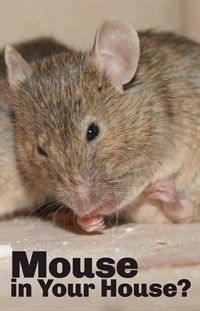 how to get mice out of your house naturally