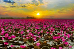8 SECRET PLACES TO VISIT IN THAILAND Thailand, the land of smiles dominates as the most popular tourist destination, Thailand honeymoon tour packages from Kochi. In Thailand, Bangkok is most visited. Thailand Honeymoon, Thailand Travel, Asia Travel, Honeymoon Tour Packages, Vietnam Voyage, Secret Places, Water Lilies, Beautiful Landscapes, Beautiful Places