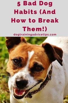 Dog Training Chewing 5 Bad Dog Habits (And How to Break Them! Training Chewing 5 Bad Dog Habits (And How to Break Them! Dog Minding, Easiest Dogs To Train, Aggressive Dog, Dog Barking, Dog Training Tips, Potty Training, Training Classes, Leash Training, Toilet Training