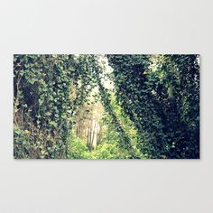 Welcome Canvas Print by Fenia Stavra - $85.00