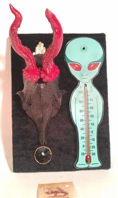 Geweih #301: Dekogeweih, abnormer Rehbock mit Alien-Thermometer kultig | helenehoelle