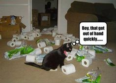 a-funny-animals-5