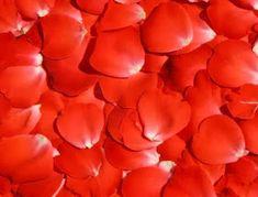 Egy kis szín és csakra tan Fényörvény Feng Shui, Rose, Flowers, Plants, Color, Quotes, Quotations, Pink, Colour