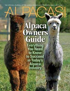 Alpacas for beginners.
